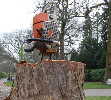 Chainsaw Stump