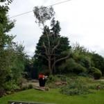 Tree Pruned