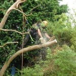 Removing the Branch