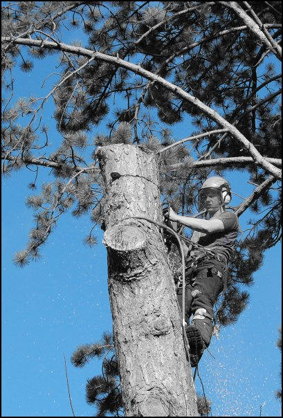 Tree Surgeon Daniel Roker working in a tree in Northamptonshire