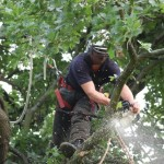 Removing the branches in for crown thinning