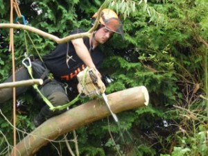 Roker Tree Services offer garden maintenance, tree surgery and other garden services