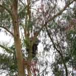 Working in the Tree