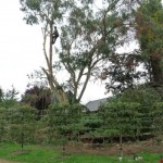 Ascending The Tree